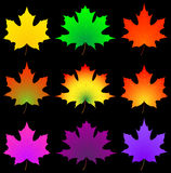 Herbst-Ahornblatt. Stockfotos
