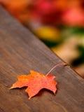Herbst-Ahornblatt    Lizenzfreie Stockfotografie