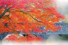 Herbst-Ahornholz und Brücke Stockfoto