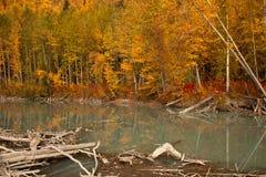 Herbst in Alaska Stockfotografie
