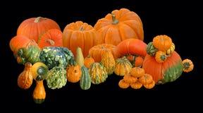 Herbst-Anordnung Lizenzfreie Stockbilder
