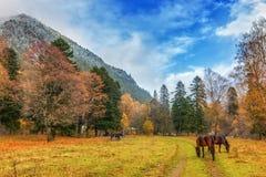 Herbst in Arkhyz Stockbild