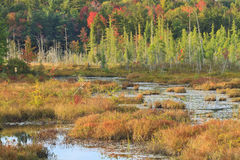 Herbst auf Adirondack Sumpf Lizenzfreie Stockfotos