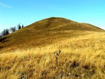 Herbst auf Bergwiesen Lizenzfreie Stockfotos
