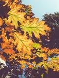 Herbst auf Blättern eines Baums Lizenzfreies Stockfoto