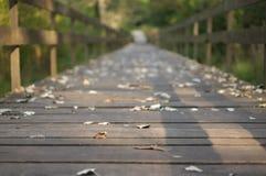 Herbst auf Brücke Stockfotos
