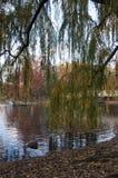 Herbst auf Central Park, New York Stockbild