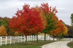 Herbst auf dem Bauernhof stockfoto