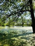 Herbst auf dem Bayou lizenzfreie stockfotos