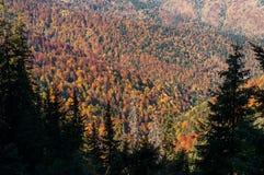 Herbst auf dem Berg stockfoto