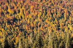 Herbst auf dem Berg lizenzfreies stockbild