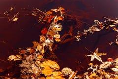 Herbst auf dem Fluss Lizenzfreies Stockbild