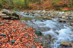 Herbst auf dem Fluss Kuban Lizenzfreies Stockbild