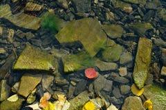 Herbst auf der Insel Stockbilder