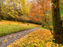 Herbst auf der Landstraße stockbilder