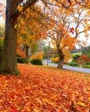 Herbst auf der Landstraße lizenzfreie stockfotos