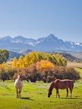 Herbst auf der Ranch lizenzfreie stockfotografie