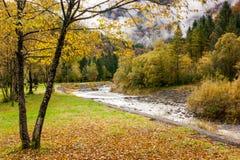 Herbst auf einem Bett von trockenen Blättern Lizenzfreies Stockbild