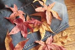Herbst auf Jeans Stockbild