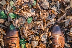 Herbst auf Schuhen lizenzfreies stockbild