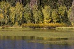 Herbst auf silbernem See Stockfotografie
