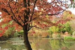 Herbst auf Teich Stockfotografie
