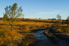 Herbst auf Woodbury-Common, Devon Lizenzfreie Stockfotografie