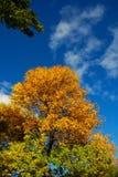 Herbst-Bäume stockbilder