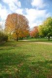 Herbst-Bäume Stockfoto