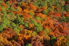 Herbst-Bäume Stockbild