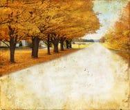 Herbst-Bäume entlang landwirtschaftlicher Straße auf Grunge Hintergrund lizenzfreie stockfotografie