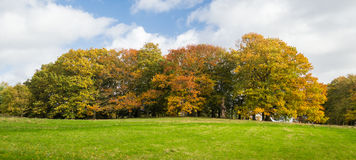 Herbst: Bäume mit Herbstfarben Lizenzfreie Stockfotografie