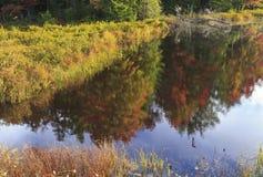 Herbst-Bäume reflektiert im Fliegen-Teich Lizenzfreie Stockfotografie