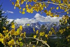 Herbst-Bäume vor Bergen Stockfotografie