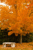 Herbst-Bank Stockfotos