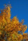 Herbst-Baum stockbilder