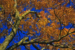 Herbst-Baum Lizenzfreie Stockbilder