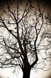 Herbst-Baum Stockfoto
