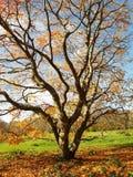 Herbst-Baum lizenzfreies stockfoto