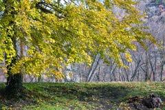 Herbst-Baum auf grasartigem Ridge Lizenzfreie Stockbilder
