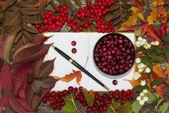 Herbst-Beeren, Moosbeere und Eberesche in einem Notizbuch Stockbilder