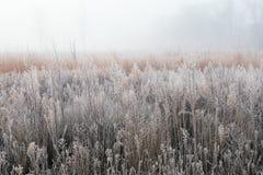 Herbst, bereiftes hohes Gras-Grasland Stockbilder