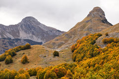 Herbst, Berg, Montenegro, Wald Lizenzfreie Stockfotos