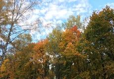 Herbst beträgt meine Lieblingsjahreszeit Lizenzfreies Stockfoto