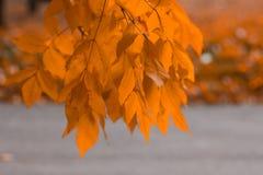 Herbst beträgt Zeit, nicht gefallene Blätter auf einem Baum stockbild