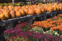 Herbst-Bildschirmanzeige Stockbild