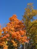 Herbst-Blätter â 04_10_2_032 Lizenzfreies Stockfoto