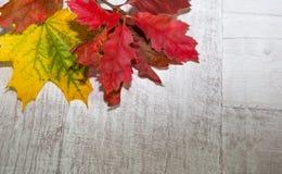 Herbst-Blätter über hölzernem Hintergrund Stockfotografie
