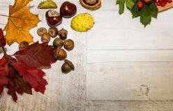 Herbst-Blätter über hölzernem Hintergrund Lizenzfreies Stockfoto