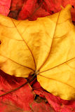 Herbst-Blätter 01 Lizenzfreie Stockfotografie
